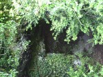 17-Mousse lierre fougère sur basalt.JPG